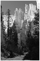 Hoodoos seen from  Queen's garden Trail. Bryce Canyon National Park, Utah, USA. (black and white)