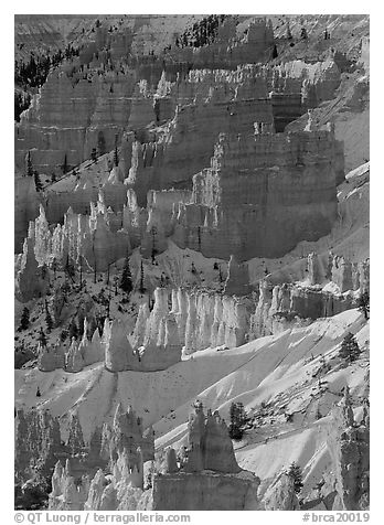 Hoodoos and snow from Sunrise Point, winter sunrise. Bryce Canyon National Park (black and white)