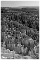 Tightly packed hoodoos from Bryce Point, sunrise. Bryce Canyon National Park, Utah, USA. (black and white)