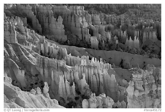Bryce amphitheater at sunrise. Bryce Canyon National Park (black and white)