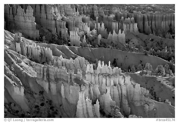 Glowing hoodoos in Queen's garden. Bryce Canyon National Park (black and white)