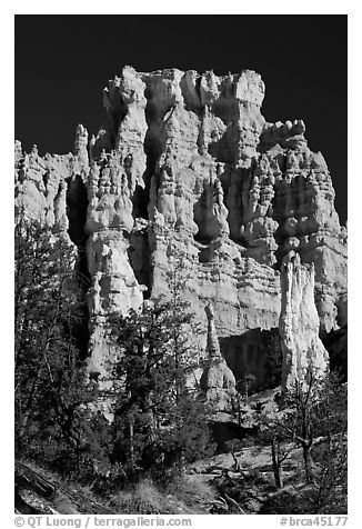 Hoodoos capped with dolomite. Bryce Canyon National Park (black and white)