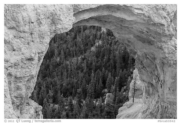 Forest seen through natural bridge. Bryce Canyon National Park (black and white)