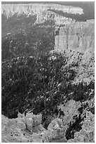 Pink cliffs. Bryce Canyon National Park, Utah, USA. (black and white)