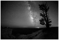 Bristlecone pine and Milky Way near Yovinpa Point. Bryce Canyon National Park, Utah, USA. (black and white)