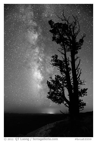 Bristlecone pine tree and Milky Way. Bryce Canyon National Park (black and white)