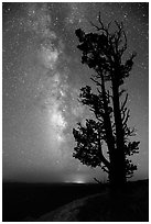 Bristlecone pine tree and Milky Way. Bryce Canyon National Park, Utah, USA. (black and white)