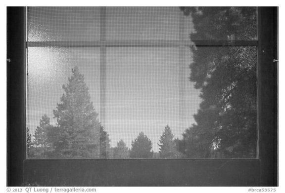 Fir trees, Visitor Center window reflexion. Bryce Canyon National Park (black and white)