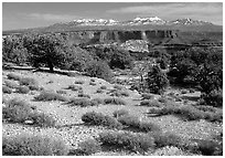 View with canyons and mountains, the Needles. Canyonlands National Park, Utah, USA. (black and white)