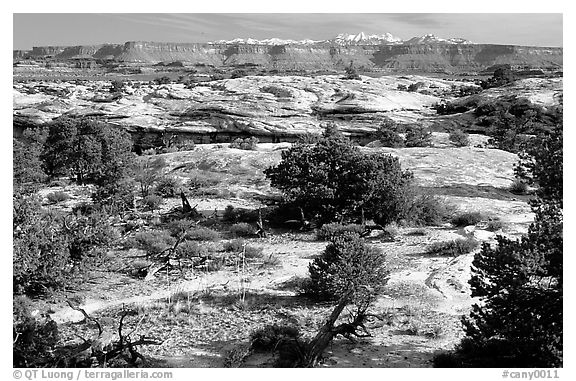 View with bare limestone table, canyons and mountains, the Needles. Canyonlands National Park (black and white)
