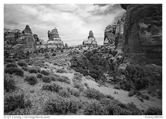 Sandstone towers, Chesler Park. Canyonlands National Park (black and white)
