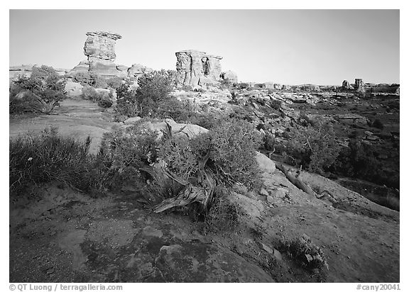Spires at Big Spring Canyon, Needles District. Canyonlands National Park (black and white)