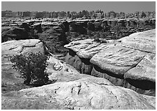 Crack and rock needles near Elephant Hill, mid-day, Needles District. Canyonlands National Park, Utah, USA. (black and white)
