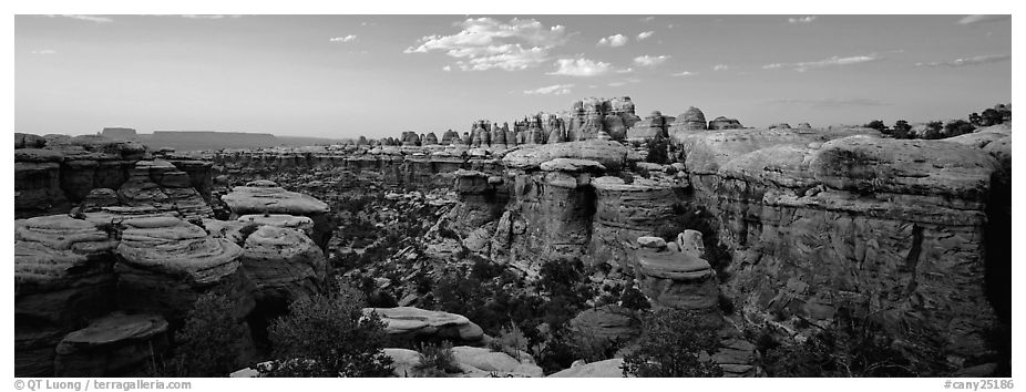 Sandstone Needles in the glow of last light, Needles District. Canyonlands National Park (black and white)