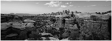 Sandstone Needles in the glow of last light, Needles District. Canyonlands National Park (Panoramic black and white)