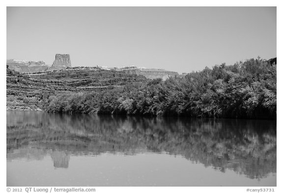 Trees on the shore of Colorado River. Canyonlands National Park (black and white)