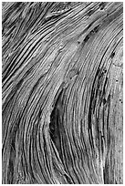 Close-up of juniper bark. Canyonlands National Park, Utah, USA. (black and white)