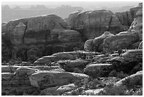 Rocks and trees, Maze District. Canyonlands National Park ( black and white)
