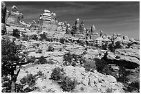 Spires and pinnacles, Dollhouse. Canyonlands National Park ( black and white)