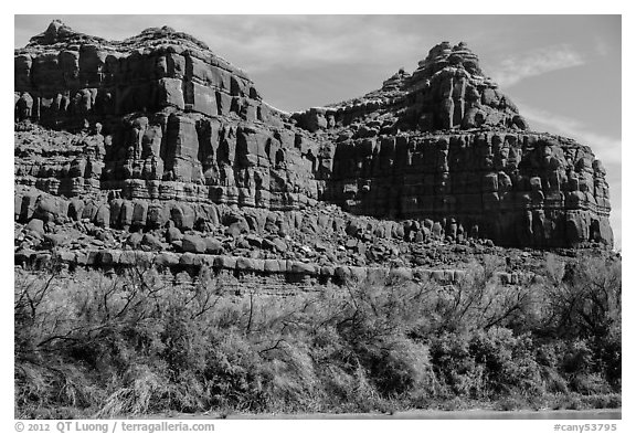 Cottonwoods and red cliffs. Canyonlands National Park (black and white)