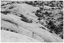 Whale Rock slickrock from above. Canyonlands National Park, Utah, USA. (black and white)