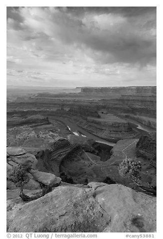 Colorado River from Dead Horse Point, morning. Canyonlands National Park (black and white)