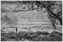 Park visitor looking, the Great Gallery,  Horseshoe Canyon. Canyonlands National Park, Utah, USA. (black and white)