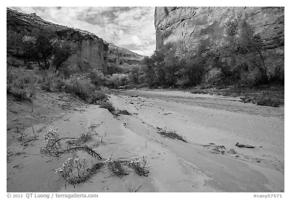 Wildflowers and fall colors along sandy wash in Horseshoe Canyon. Canyonlands National Park (black and white)