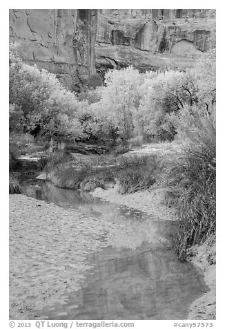 Cottonwoods in fall foliage reflected in creek, Horseshoe Canyon. Canyonlands National Park (black and white)