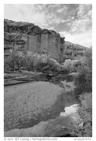 Creek, cottonwood trees in fall foliage, and cliffs, Horseshoe Canyon. Canyonlands National Park (black and white)