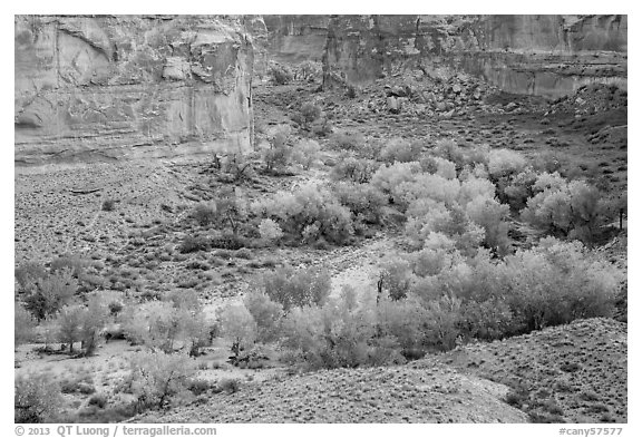 Horseshoe Canyon in autumn. Canyonlands National Park (black and white)
