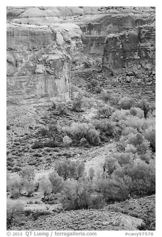 Horseshoe Canyon from the rim in autumn. Canyonlands National Park (black and white)