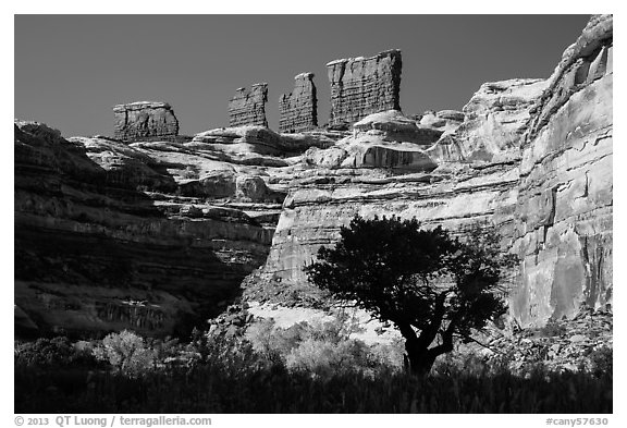Trees below the Chocolate Drops, Maze District. Canyonlands National Park (black and white)
