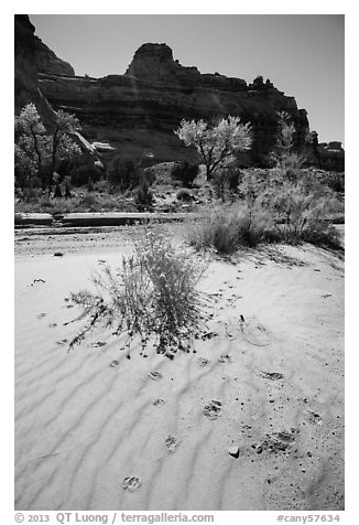Sand ripples and animal tracks, Maze District. Canyonlands National Park (black and white)