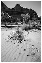 Sand ripples and animal tracks, Maze District. Canyonlands National Park ( black and white)
