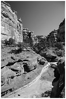 Canyon bottom, the Maze. Canyonlands National Park, Utah, USA. (black and white)