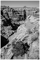 Maze canyons and Eckert Butte. Canyonlands National Park, Utah, USA. (black and white)