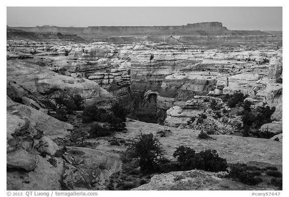 Shot Canyon at dusk, Maze District. Canyonlands National Park (black and white)