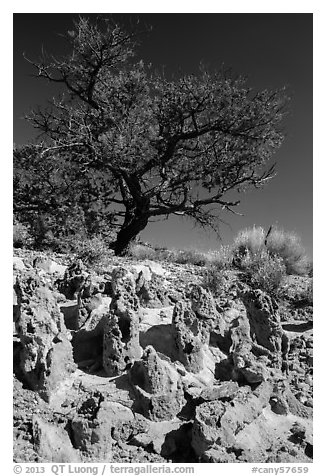 Concretions and tree, Orange Cliffs Unit, Glen Canyon National Recreation Area, Utah. USA (black and white)