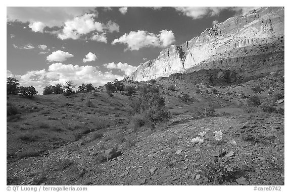 Wildflowers Waterpocket Fold, and clouds. Capitol Reef National Park (black and white)