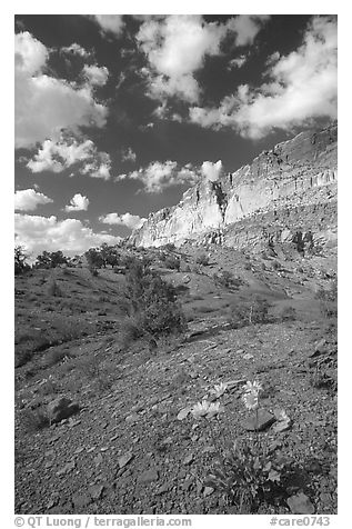 Wildflowers and Waterpocket Fold cliffs, afternoon. Capitol Reef National Park (black and white)