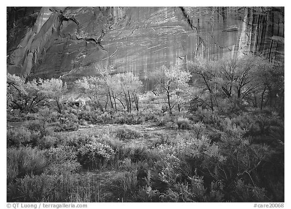 Sagebrush, trees, and cliffs with desert varnish at dusk. Capitol Reef National Park (black and white)