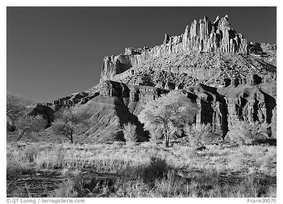 Cottonwods in fall colors at the base of the Castle. Capitol Reef National Park (black and white)