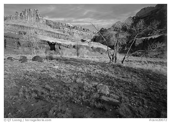 Castle Meadow and Castle, late autum morning. Capitol Reef National Park (black and white)