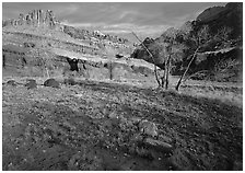 Castle Meadow and Castle, late autum morning. Capitol Reef National Park, Utah, USA. (black and white)