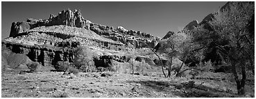 Cottonwoods in spring and Castle rock formation. Capitol Reef National Park (Panoramic black and white)