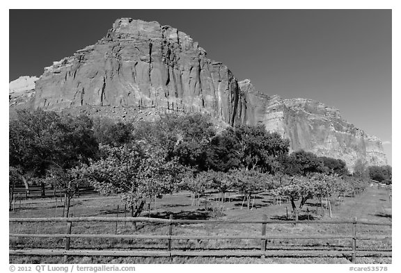 Fruita orchard and cliffs in summer. Capitol Reef National Park (black and white)