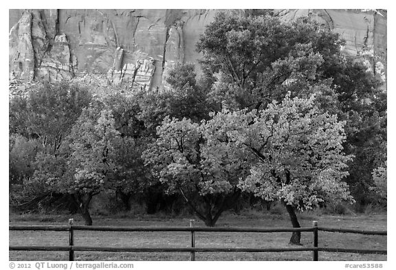 Fruit trees in historic orchard and red cliffs. Capitol Reef National Park (black and white)