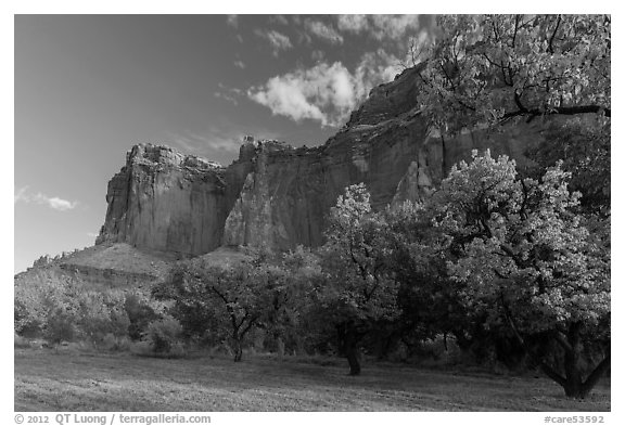 Historic orchard and cliffs, late summer. Capitol Reef National Park (black and white)