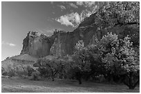 Historic orchard and cliffs, late summer. Capitol Reef National Park, Utah, USA. (black and white)